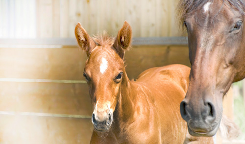 Durham Equine Reproduction Work